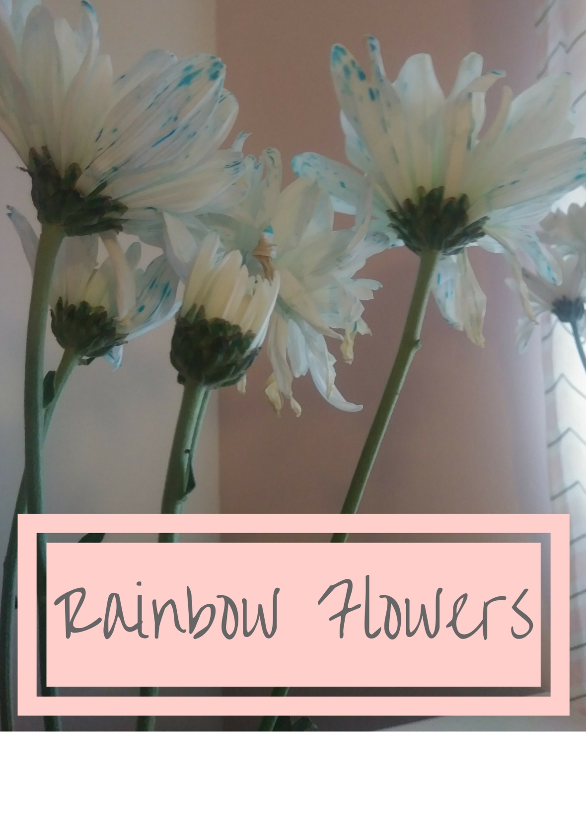 RainbowFlowers